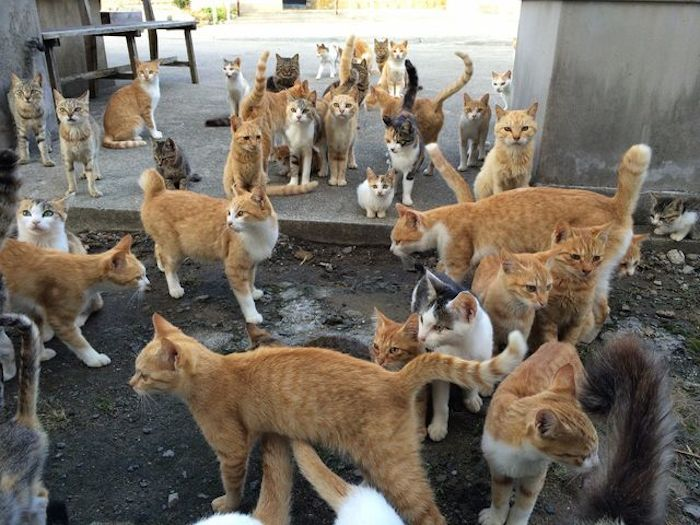 how to get to cat island japan
