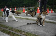 houtong-cats-4[2]