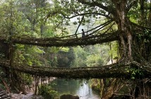 living-bridge-india-wcth01_